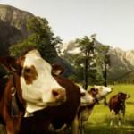 Animals-2 copy