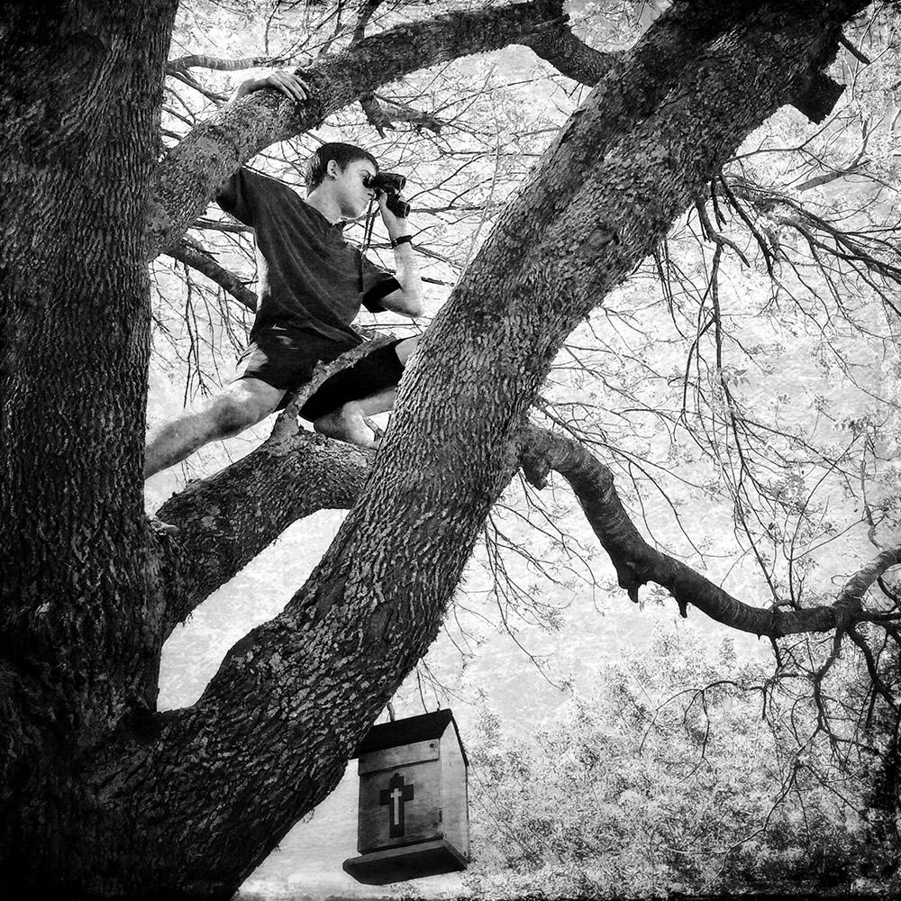 Abram w/binoculars in a tree/Rosenberg